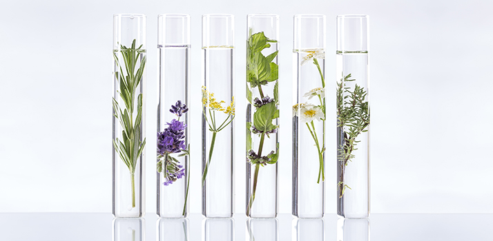 лікарські рослини - найкращі помічники проти старіння шкіри