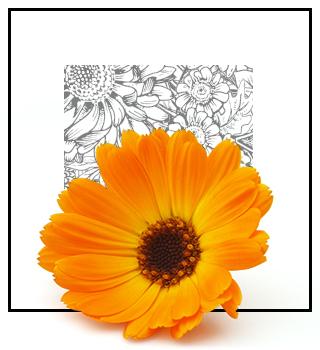 Нішеві парфуми - квіткові
