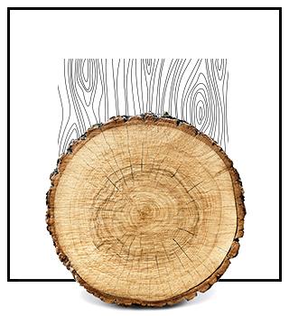Нішеві парфуми - деревні